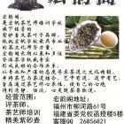 福州白茶专卖百年世家工艺纯天然养生保健、抗癌美容