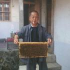 农家土蜂蜜出售