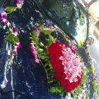 鲜花婚车布置  感恩 优惠中