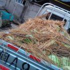 南通批发市场水果蔬菜包车拉货