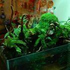制作设计水族箱,水陆缸,雨林生态缸