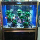 福州出个全新的的可丽爱高缸矮柜鱼缸